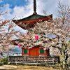 Japonia-w-czasie-hanami-01