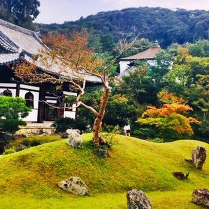 Japonia w czasie hanami.