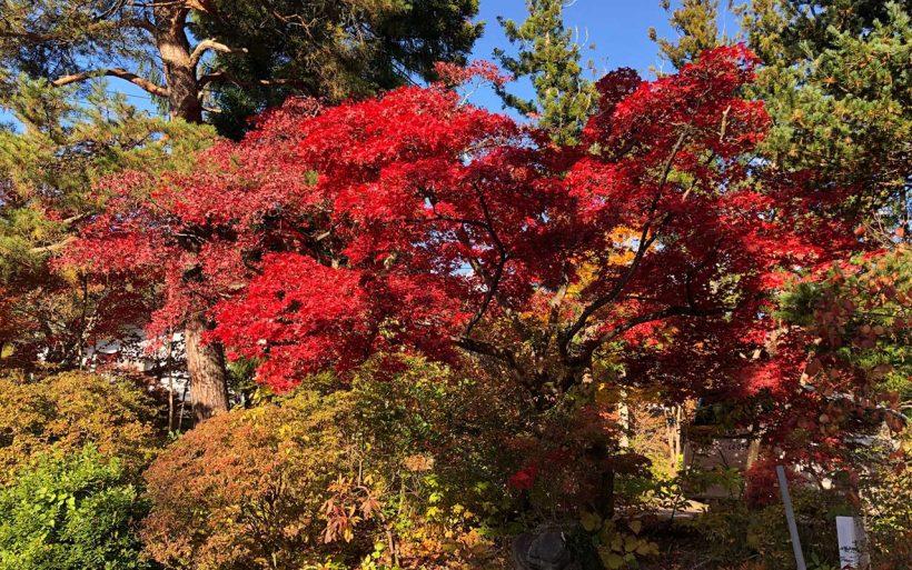 Koyo-czyli-japonska-eksplozja-kolorow-09