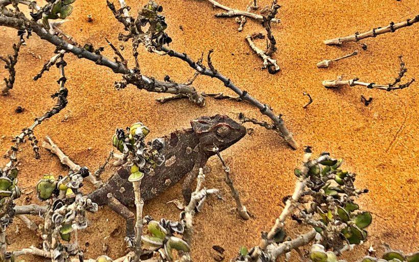 Namibia-kraj-zachodzacego-slonca-02