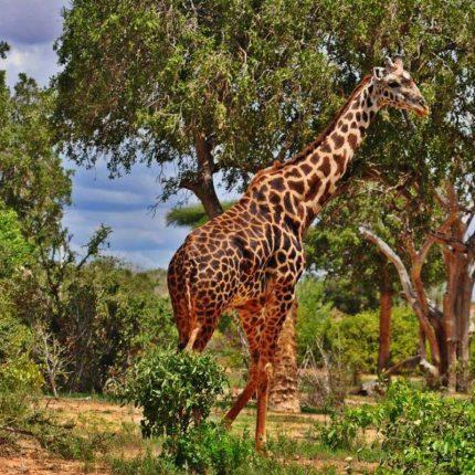 RPA z Namibią wakacje u Króla Lwa.