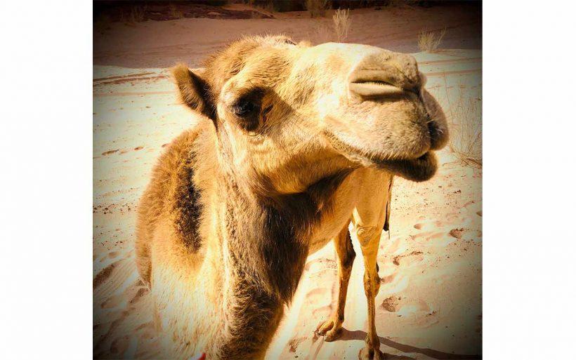 Jordania–kraina-nie-tylko-Nabatejczykow-07