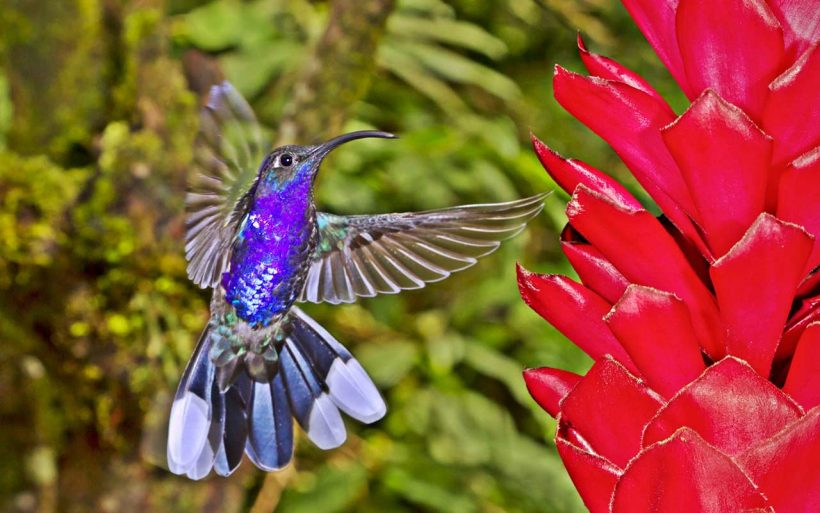 Kostaryka, Nikaragua, Panama