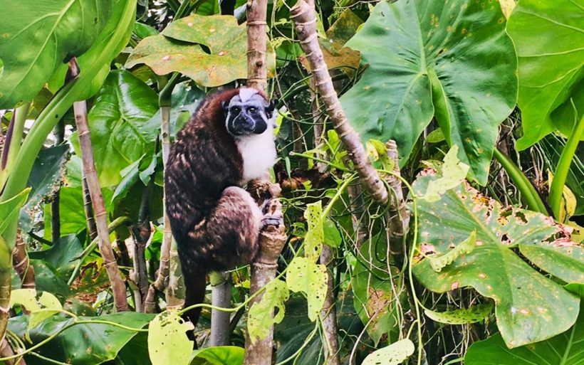 Kostaryka-Nikaragua-Panama-Pura-Vida-09